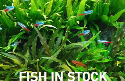Look at the fish we have in stock this week!